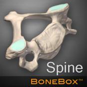 BoneBox - Spine
