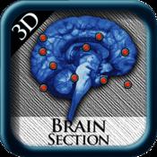 Brain Section 3D