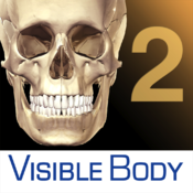 Skeleton Premium 2