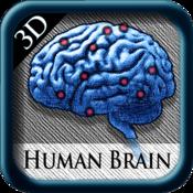 Human Brain Pins 3D