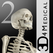 Essential Skeleton 2