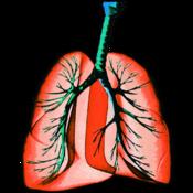 Respiratory System H