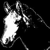 Exemplar Equus Harmony