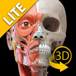 Muscular System Lite - Upper Limb - 3D Atlas of Anatomy