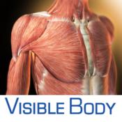3D Muscular Premium Anatomy