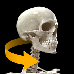 Skeletal System 3D Atlas of Anatomy