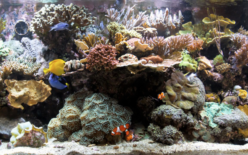 Bluscenes Coral Reef Aquarium Hd Download App Mac Lisisoft
