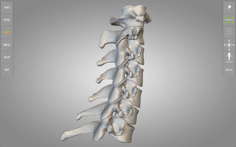 Skeletal System 3D Atlas of Anatomy